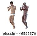 筋肉 解剖 男性のイラスト 46599670