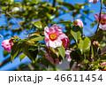 梅の花 46611454