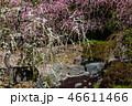 梅の花 46611466