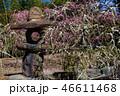 梅の花 46611468