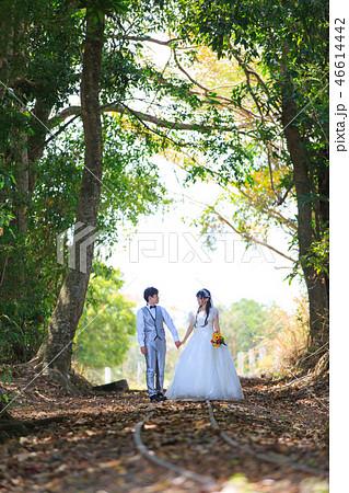 トロピカルな森の中の線路上で見つめ合うカップル 46614442