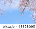 桜 春 花の写真 46623095