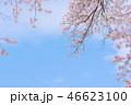 桜 春 花の写真 46623100