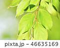 新緑 植物 葉の写真 46635169