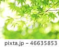 葉 新緑 植物の写真 46635853
