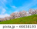 桜並木 桜 春の写真 46638193