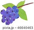 水彩 白バック 果物のイラスト 46640463