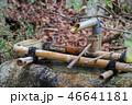 水 日本 植物の写真 46641181