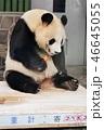 動物 パンダ 大熊猫の写真 46645055