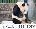 動物 パンダ 大熊猫の写真 46645056
