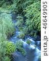 渓流 新緑 川の写真 46649905