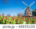 ふなばしアンデルセン公園 チューリップ 花畑の写真 46650100