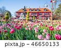 ふなばしアンデルセン公園 チューリップ 花の写真 46650133