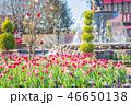 ふなばしアンデルセン公園 チューリップ 花の写真 46650138