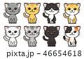 猫 動物 かわいいのイラスト 46654618