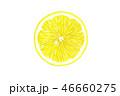 レモンの切り口 水彩画 46660275