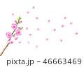桃の花 水彩画 46663469