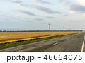 Road along edge of a wheaten field on the blue sky background 46664075