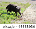 野良猫 猫 動物の写真 46683930