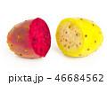 ウチワサボテン 団扇サボテン さぼてんの写真 46684562