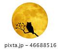 月とミミズク 46688516