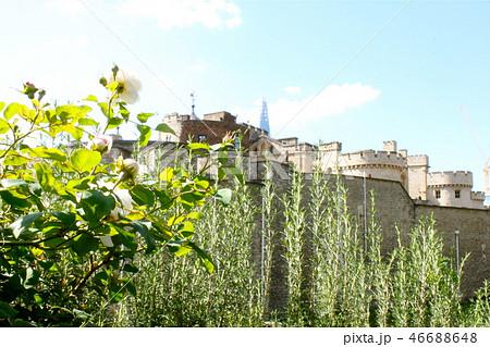 ロンドン塔とバラの花 46688648