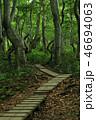 薄暗い木道 46694063