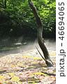 鳥海マリモ周辺の朝霧 46694065