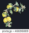 水彩画 フラワー 花のイラスト 46696889