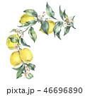 水彩画 フラワー 花のイラスト 46696890