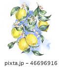 水彩画 フラワー 花のイラスト 46696916