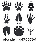 Animal Paws, Hoofs and Foot Trace Prints 46709796