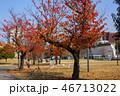 いこいの道の紅葉と大分駅 46713022
