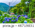 箱根町 紫陽花 初夏の写真 46719831