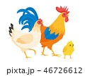 Chicken family: hen, rooster  46726612