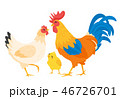 Chicken family: hen, rooster 46726701