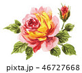 rose181231pix7 46727668