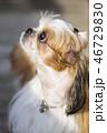 ペット 愛犬 本 46729830