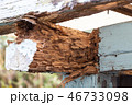シロアリに食われた小屋 シロアリ被害 46733098