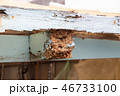 シロアリに食われた小屋 シロアリ被害 46733100