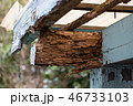 シロアリに食われた小屋 シロアリ被害 46733103