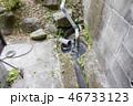 家庭排水をポンプでくみ上げる 汚水用ポンプ 46733123