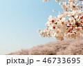 染井吉野 花 桜の写真 46733695