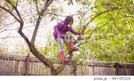 Little girl with apples climbing down a tree 46740326