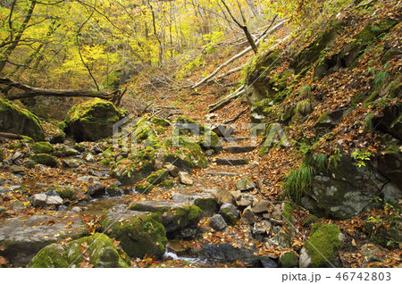 紅葉の御岳山 ロックガーデン 46742803