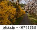 秩父鉄道 春の武州日野駅④ 46743638