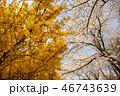 秩父鉄道 春の武州日野駅⑤ 46743639