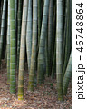 竹藪 竹 竹林の写真 46748864