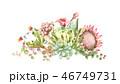 多肉植物 水彩画 フローラルのイラスト 46749731