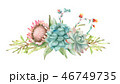多肉植物 水彩画 フローラルのイラスト 46749735
